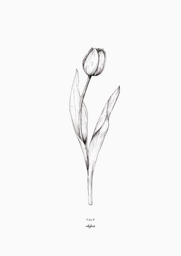 tulip drawing simple how to draw a tulip step by step drawing tutorials tulip simple drawing