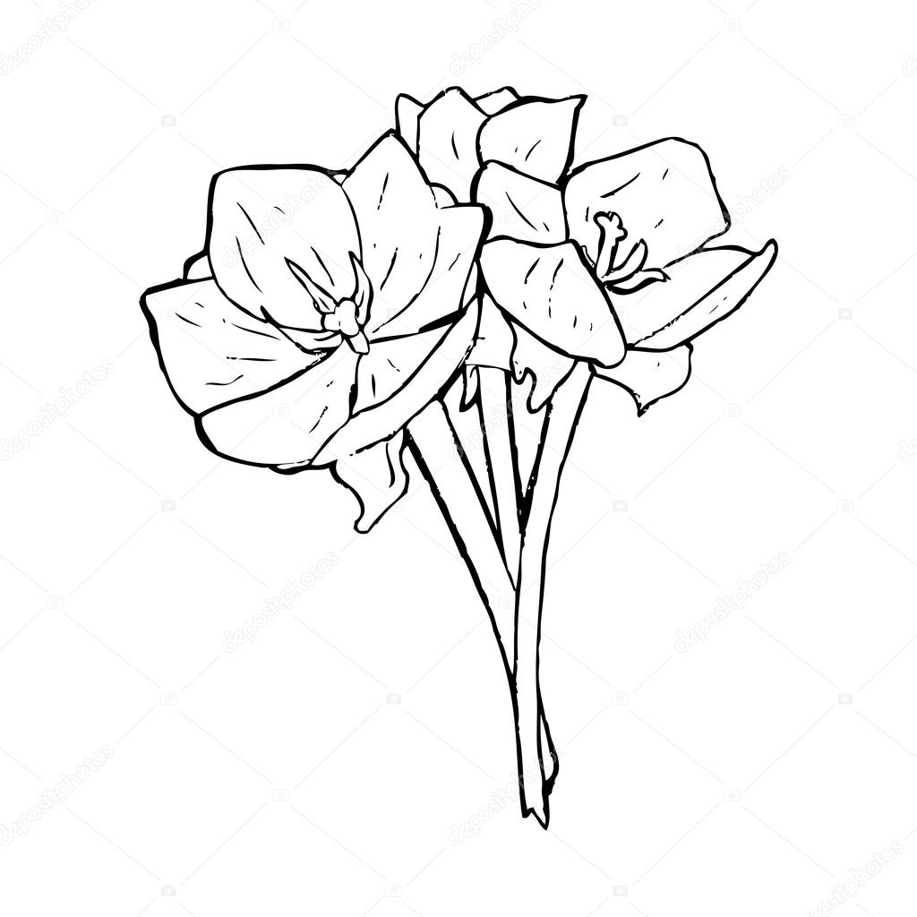 tulip drawing simple tulip how to draw flowers tulip youtube drawing simple tulip
