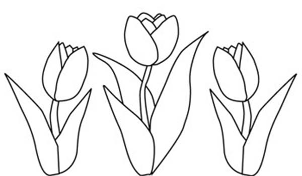 tulip drawing simple tulips pencil drawing at getdrawings free download drawing simple tulip