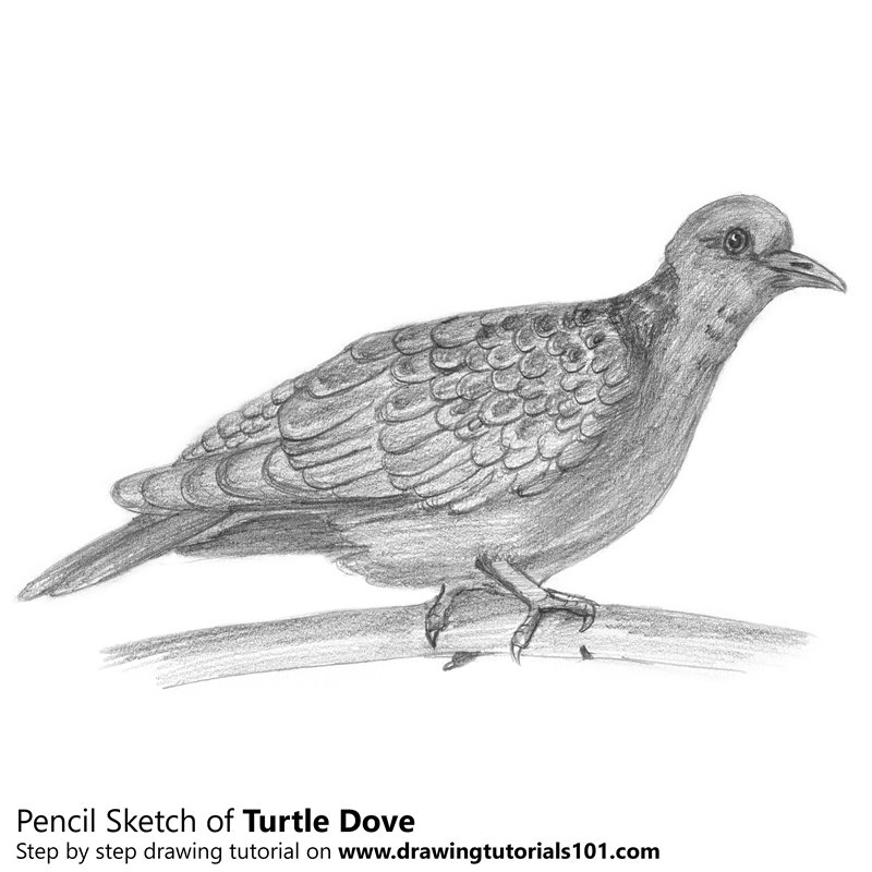 turtle dove template flying dove clip art at clkercom vector clip art online turtle template dove