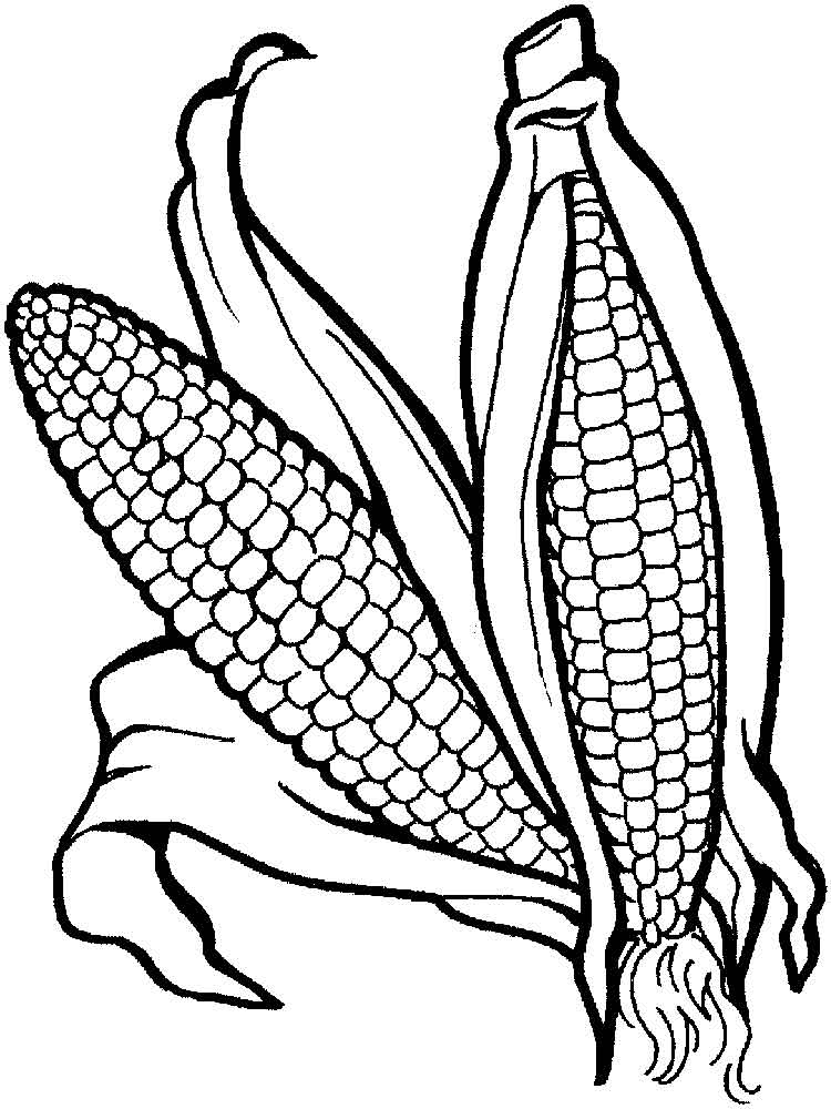 vegetable pictures to colour corn coloring pages download and print corn coloring pages pictures vegetable colour to