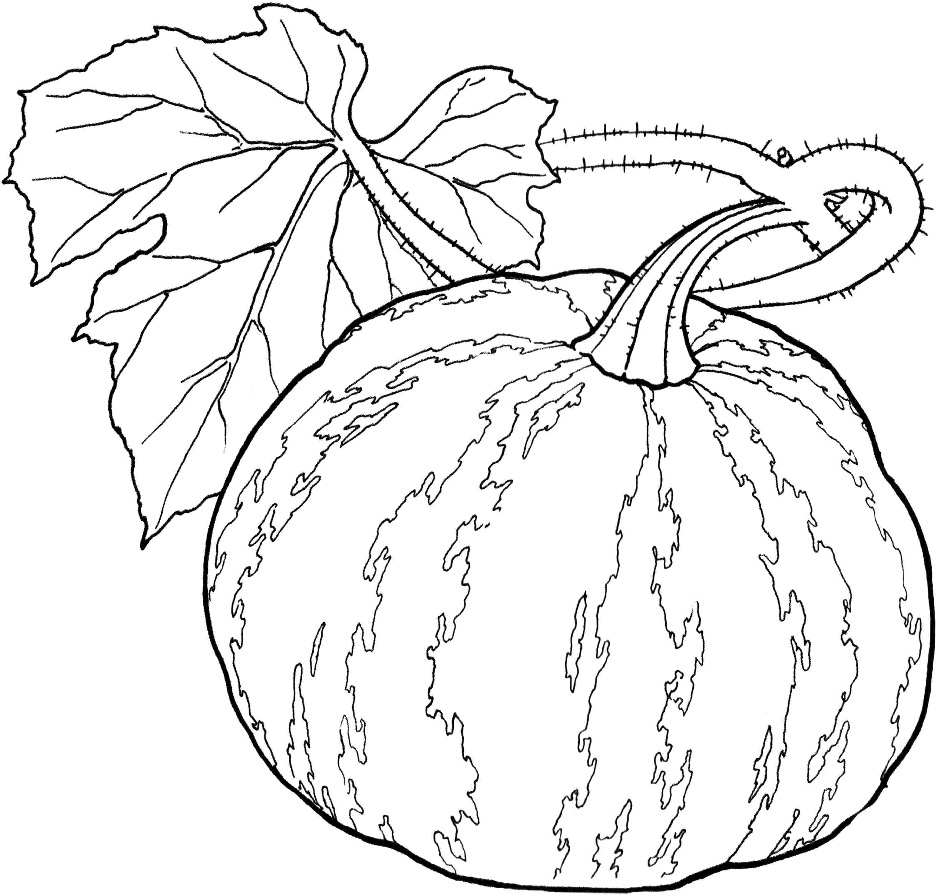 vegetable pictures to colour gourd coloring pages at getcoloringscom free printable colour pictures vegetable to