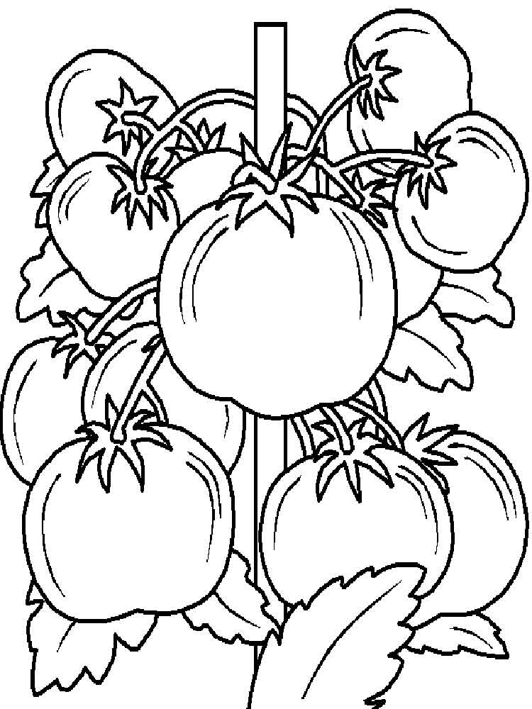 vegetable pictures to colour vegetable coloring download vegetable coloring for free 2019 colour pictures to vegetable