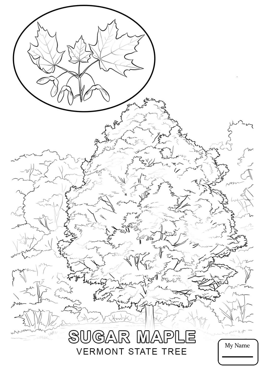 vermont state flag coloring page vermont state outline coloring sheet the us50 state vermont coloring flag page state
