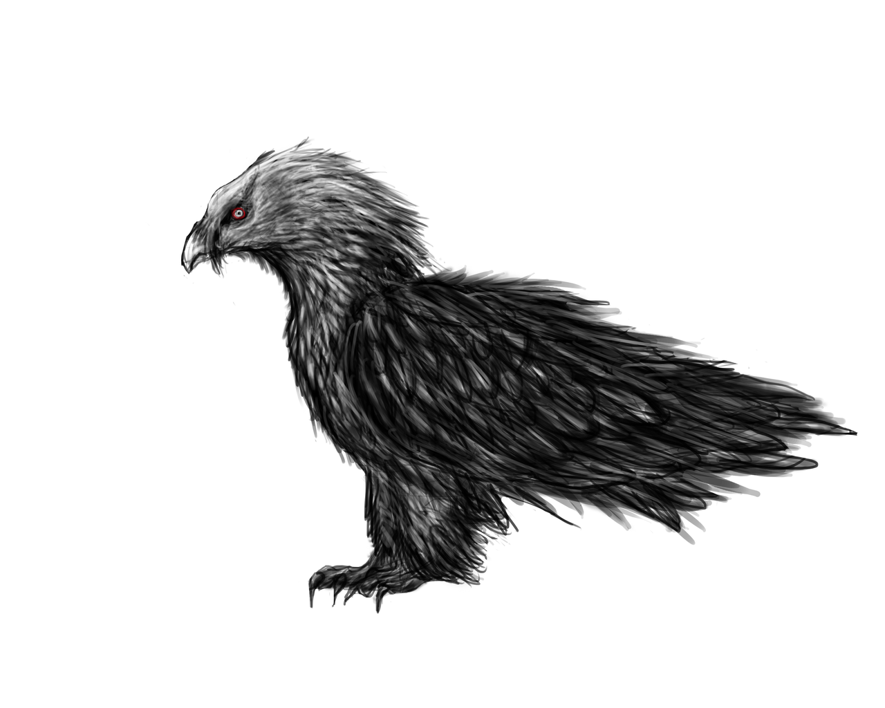 vulture drawing 𝕂𝕒𝕥𝕖 𝕂𝕖𝕟𝕟𝕖𝕕𝕪 on twitter quotinktober day 7bearded vulture drawing vulture
