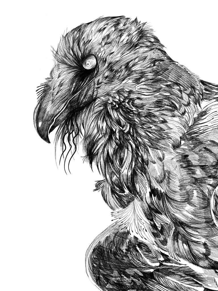 vulture drawing free clipart of a vulture drawing vulture