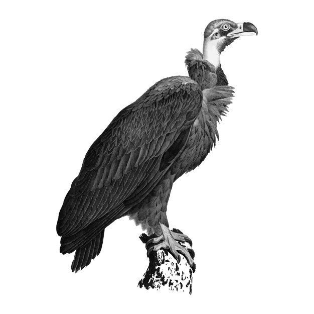 vulture drawing vulture beggar 2001 by caramitten creature picture vulture drawing