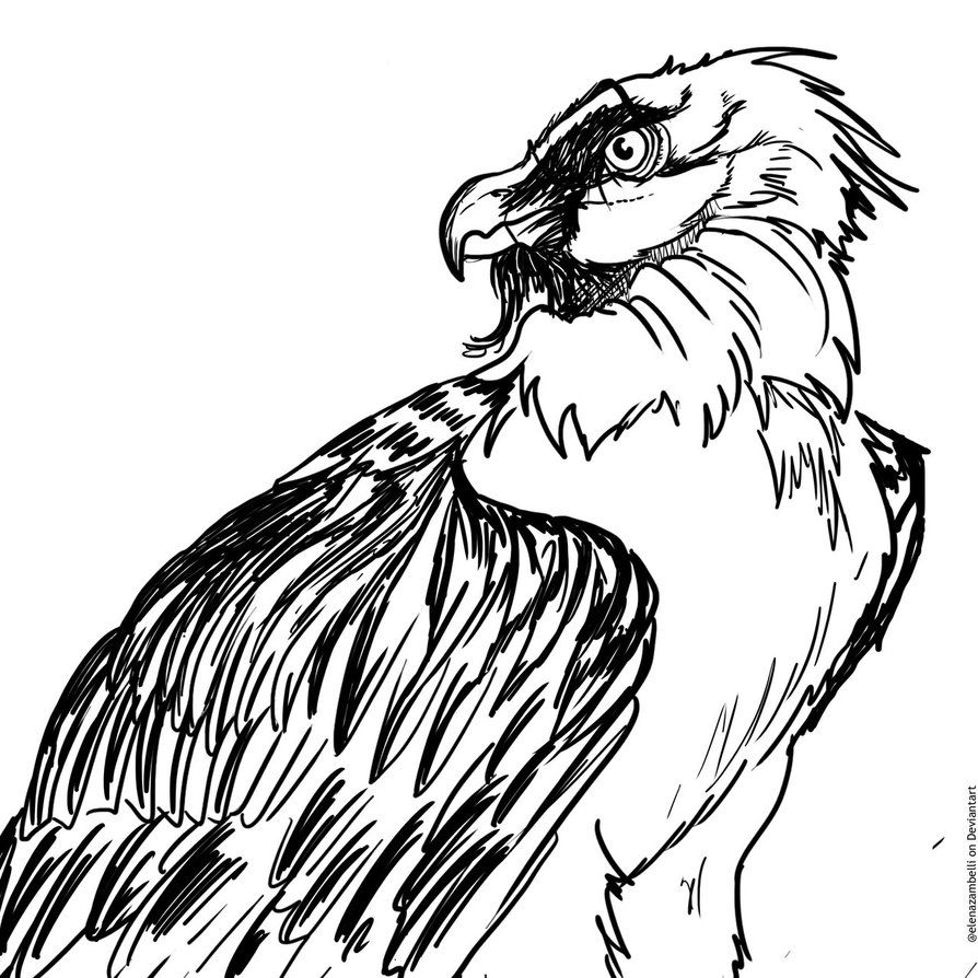 vulture drawing vulture by feathereddiva on deviantart drawing vulture