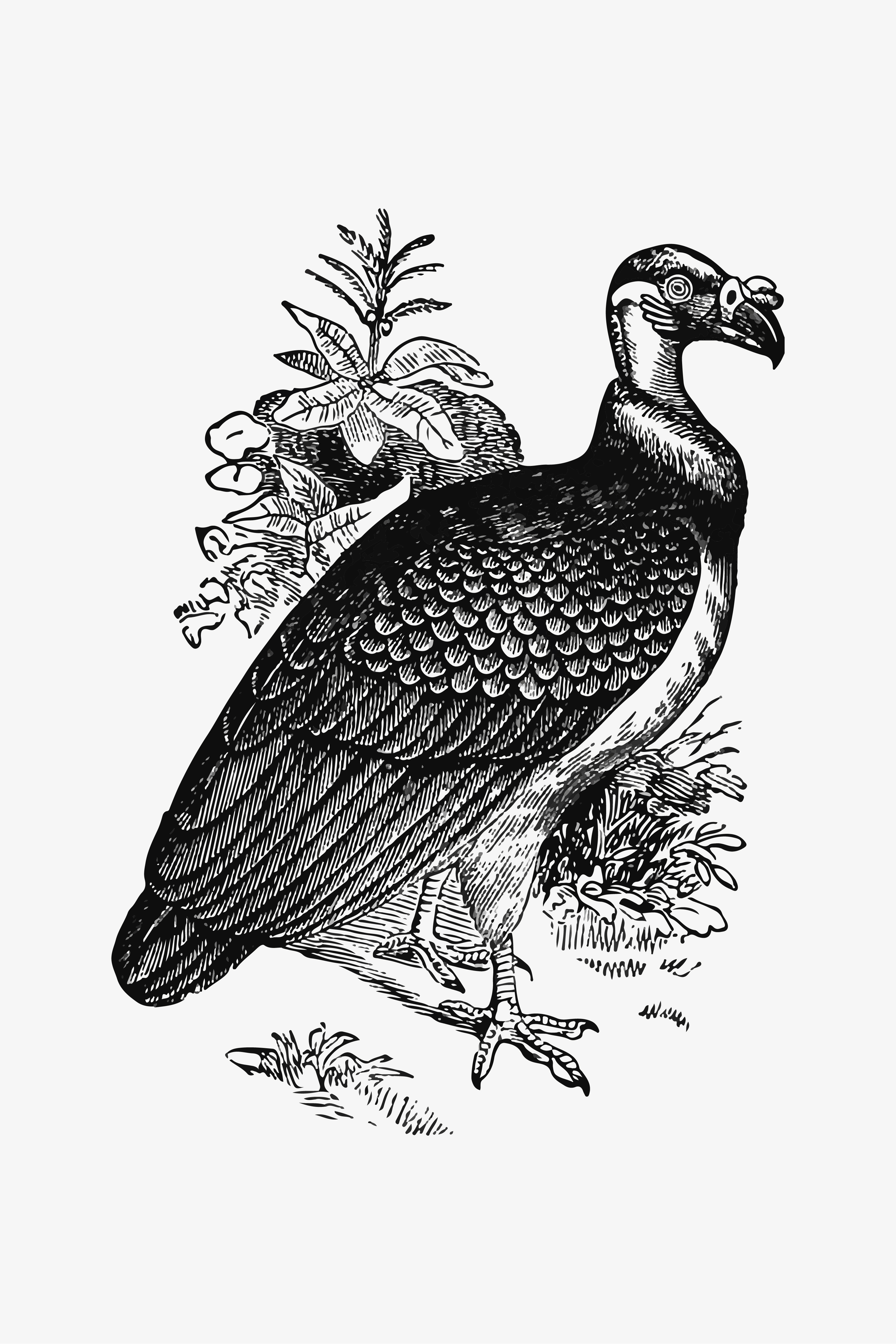vulture drawing vulture images free vectors stock photos psd drawing vulture