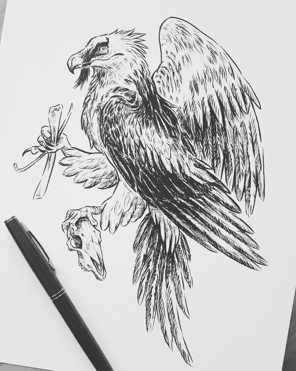 vulture drawing white backed vulture by leenzuydgeestdeviantartcom on drawing vulture