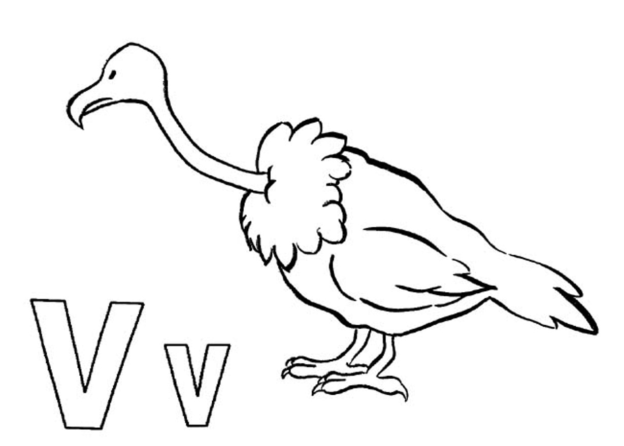 vulture images to color long billed indian vulture coloring page free printable images color vulture to