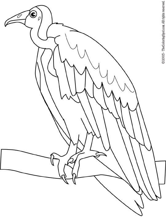 vulture images to color printable flying vulture free sheets coloring page to images vulture color