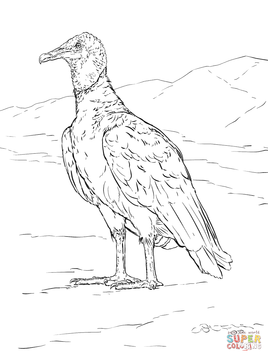 vulture images to color realistic black vulture coloring page free printable color to images vulture