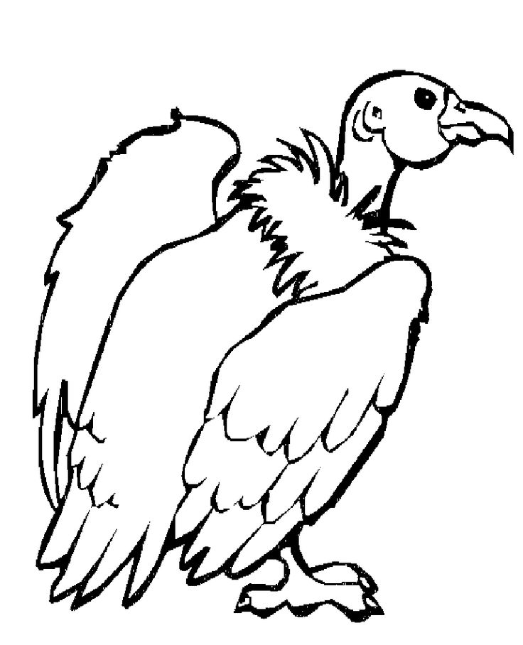 vulture images to color vulture coloring page at getcoloringscom free printable vulture images to color