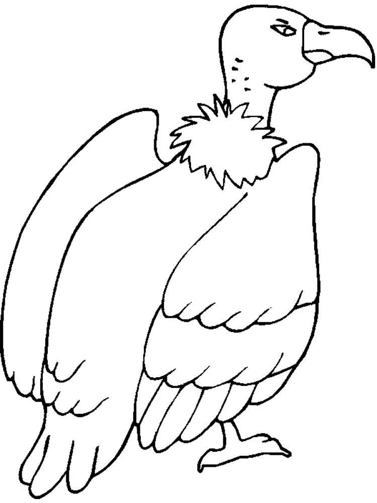 vulture images to color vulture coloring pages download and print for free vulture to images color