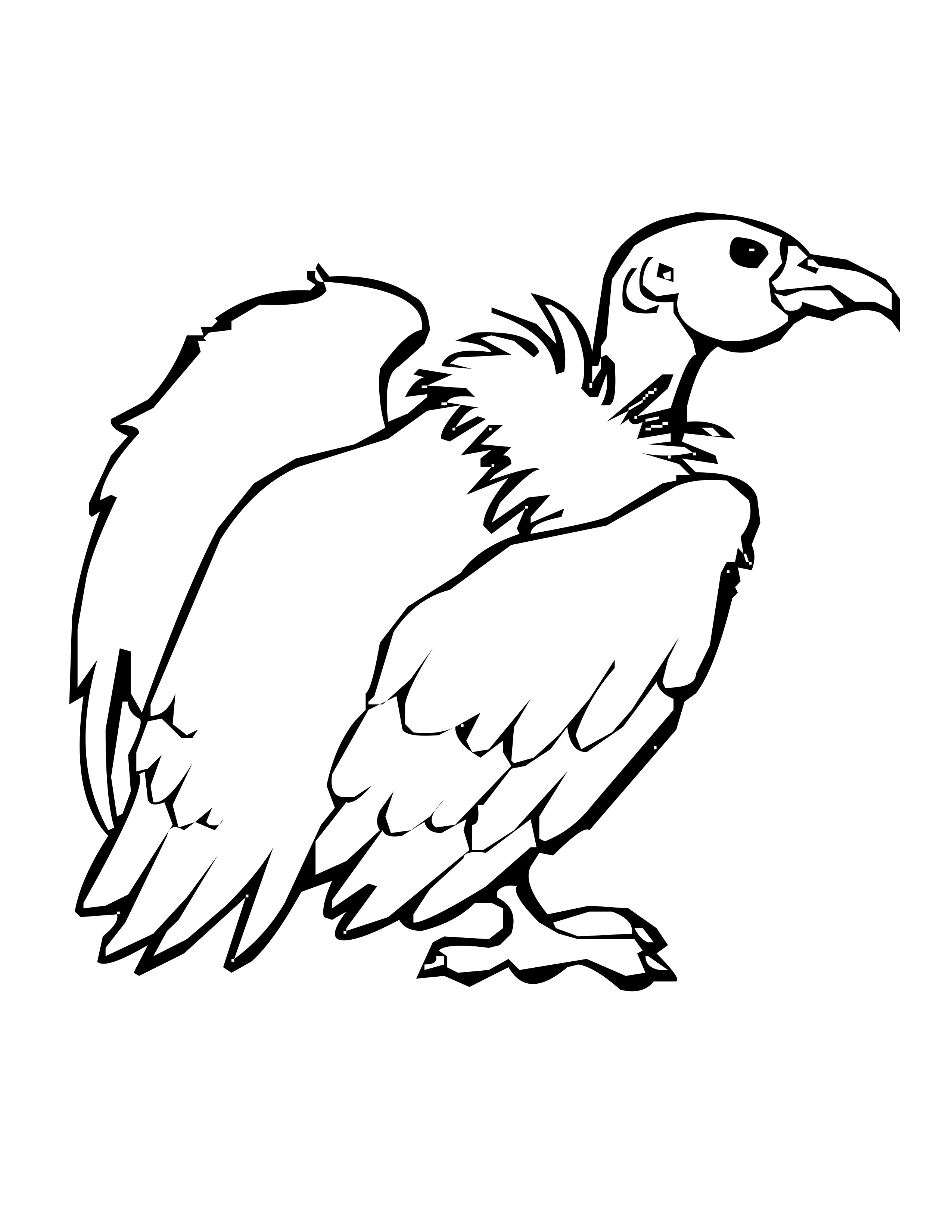 vulture images to color vulture coloring pages preschool and kindergarten images to vulture color