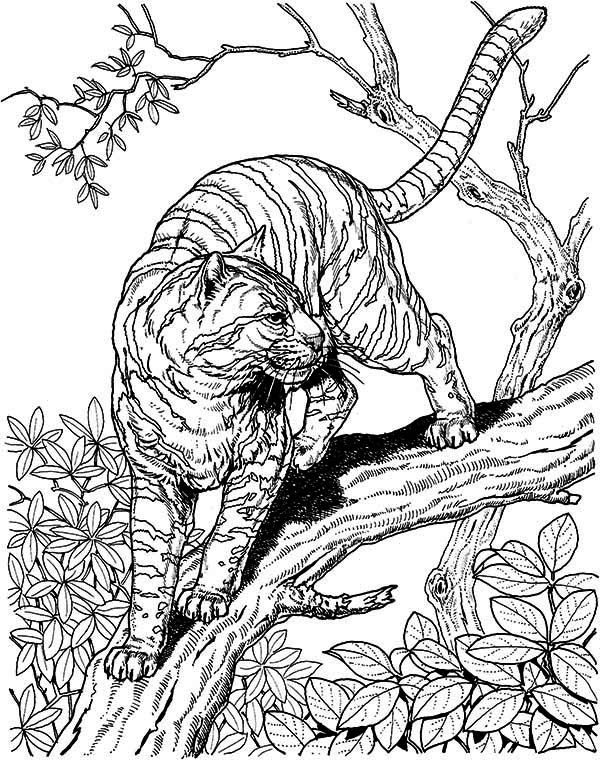 wild cat coloring pages big cat coloring pages wild coloring pages cat