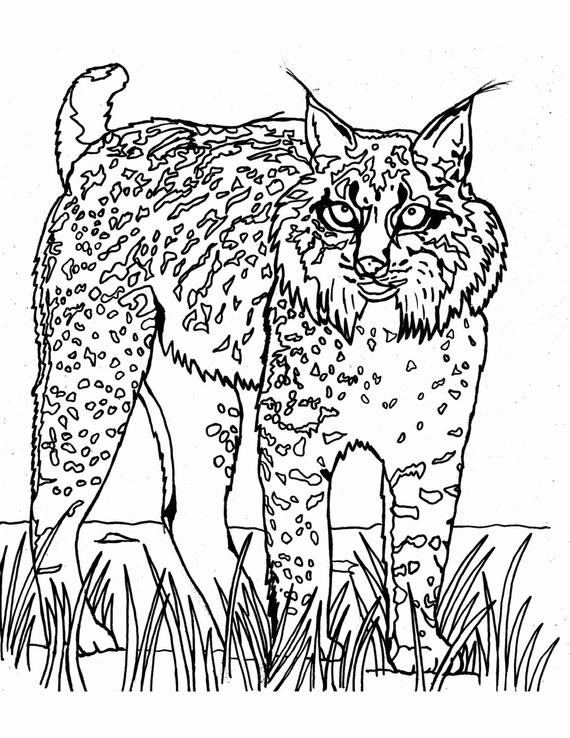 wild cat coloring pages go wild cats coloring page twisty noodle cat coloring pages wild