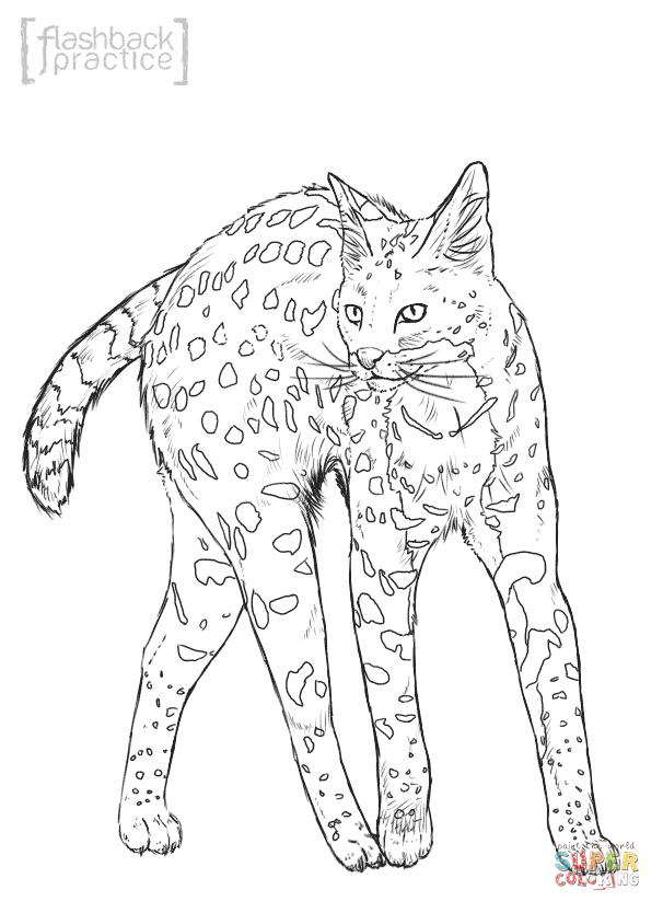 wild cat coloring pages wild cat colouring pages clipart best pages coloring cat wild