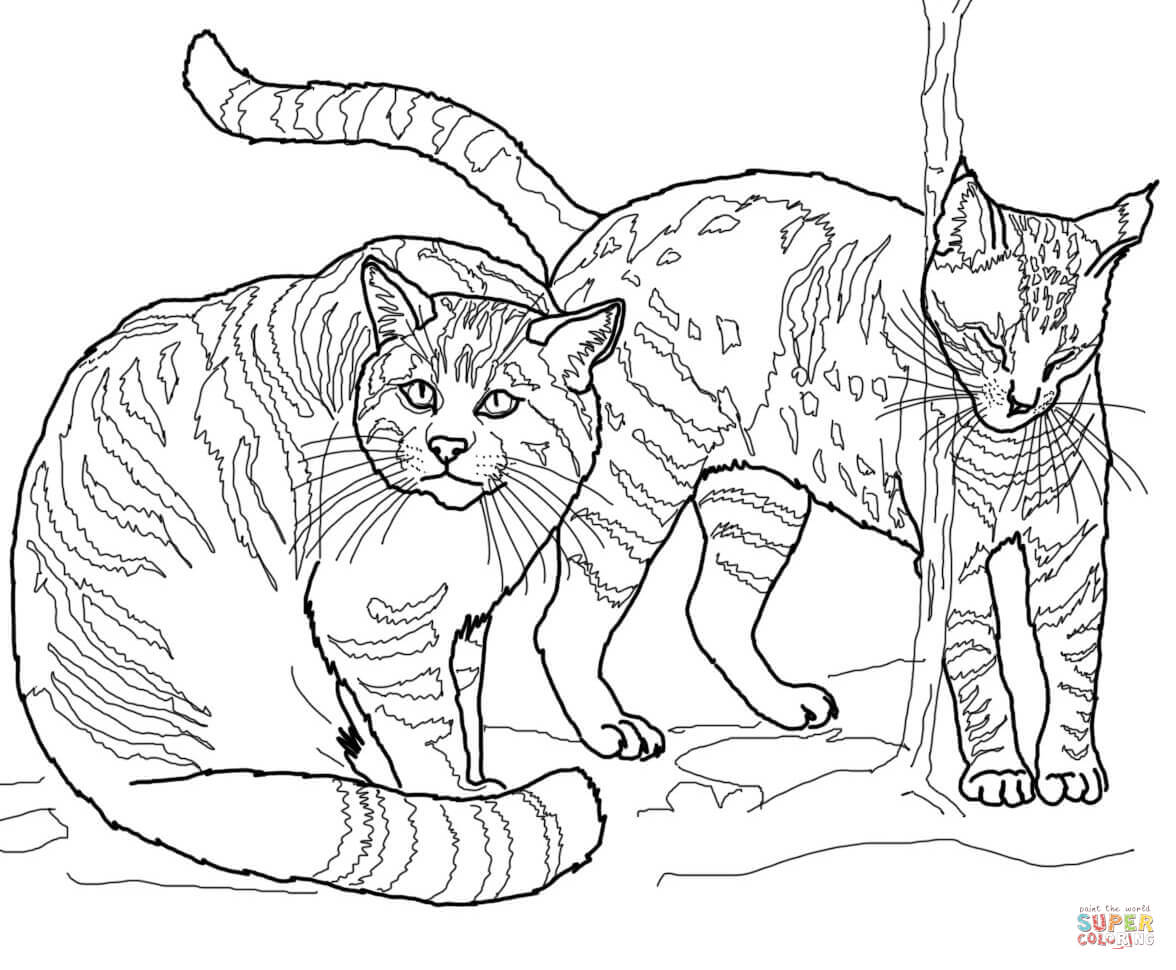 wild cat coloring pages wild cats free coloring pages coloring pages wild cat