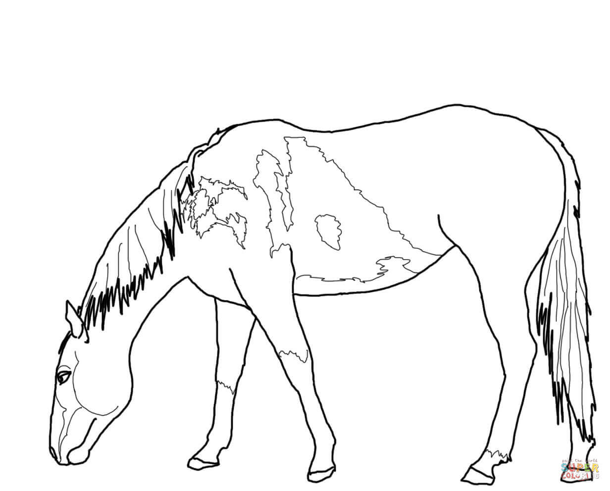 wild mustang coloring pages 35 best favorite horse colouring pages images on pinterest wild pages mustang coloring
