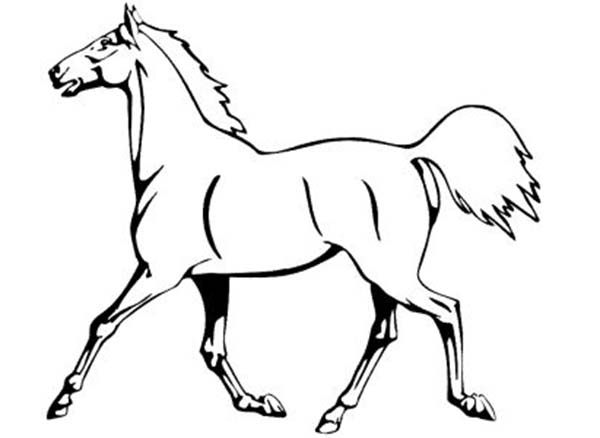 wild mustang coloring pages black mustang horse iron on transfer wild mustang pages coloring