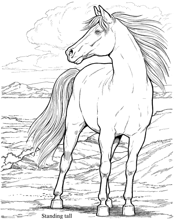 wild mustang coloring pages coloring pages horse coloring pages free and printable pages coloring wild mustang