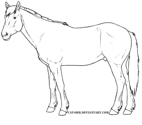 wild mustang coloring pages mustang horse outline coloring pages mustang pages wild coloring