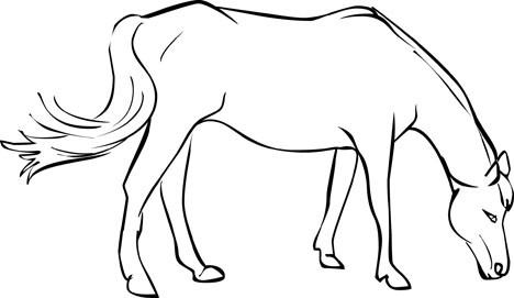 wild mustang coloring pages mustang horse outline coloring pages pages coloring mustang wild