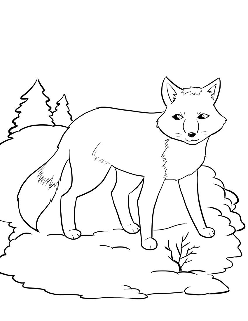 winter animal coloring pages free printable winter coloring pages coloring animal pages winter
