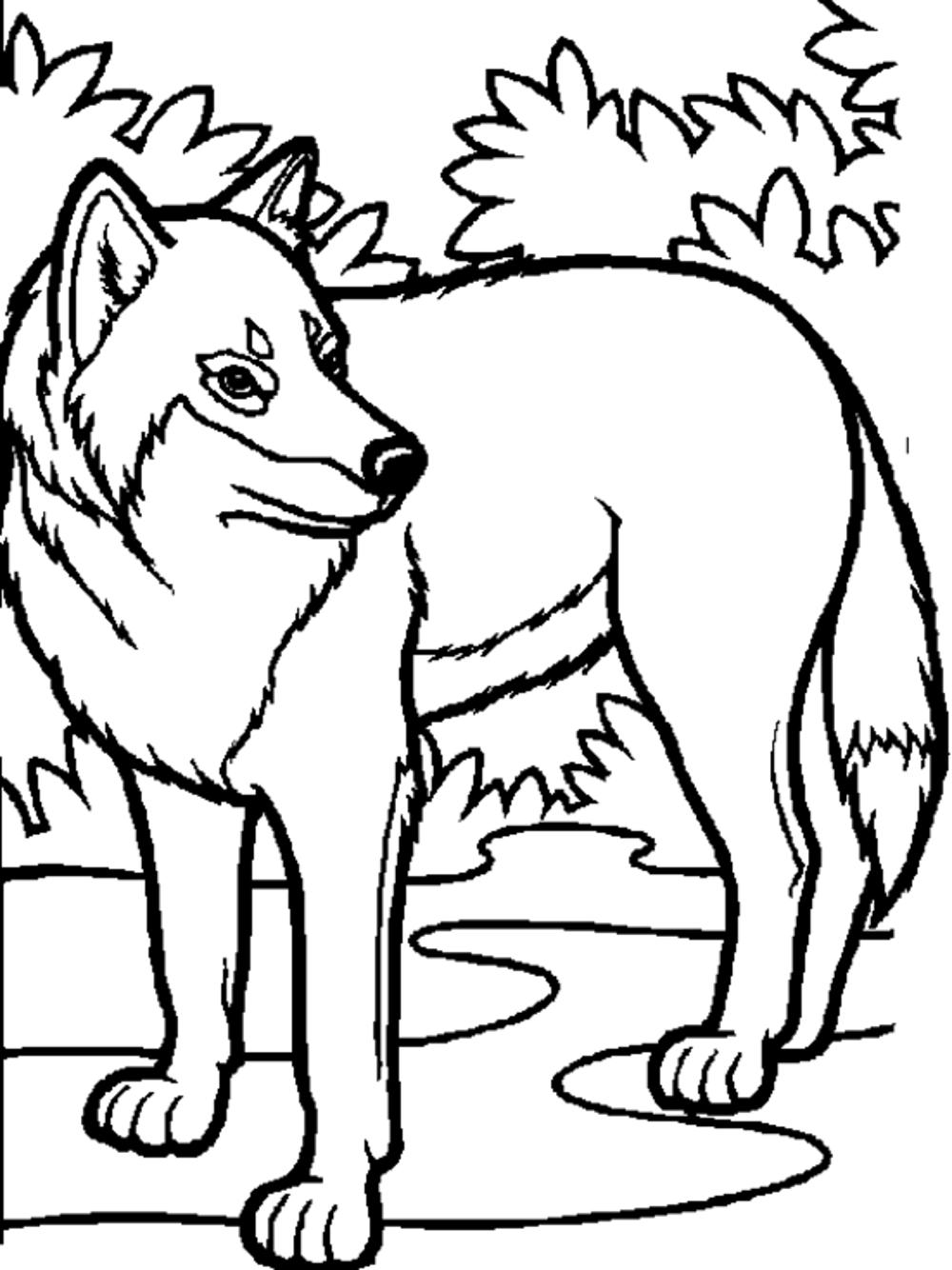 wolf color print download wolf coloring pages theme color wolf