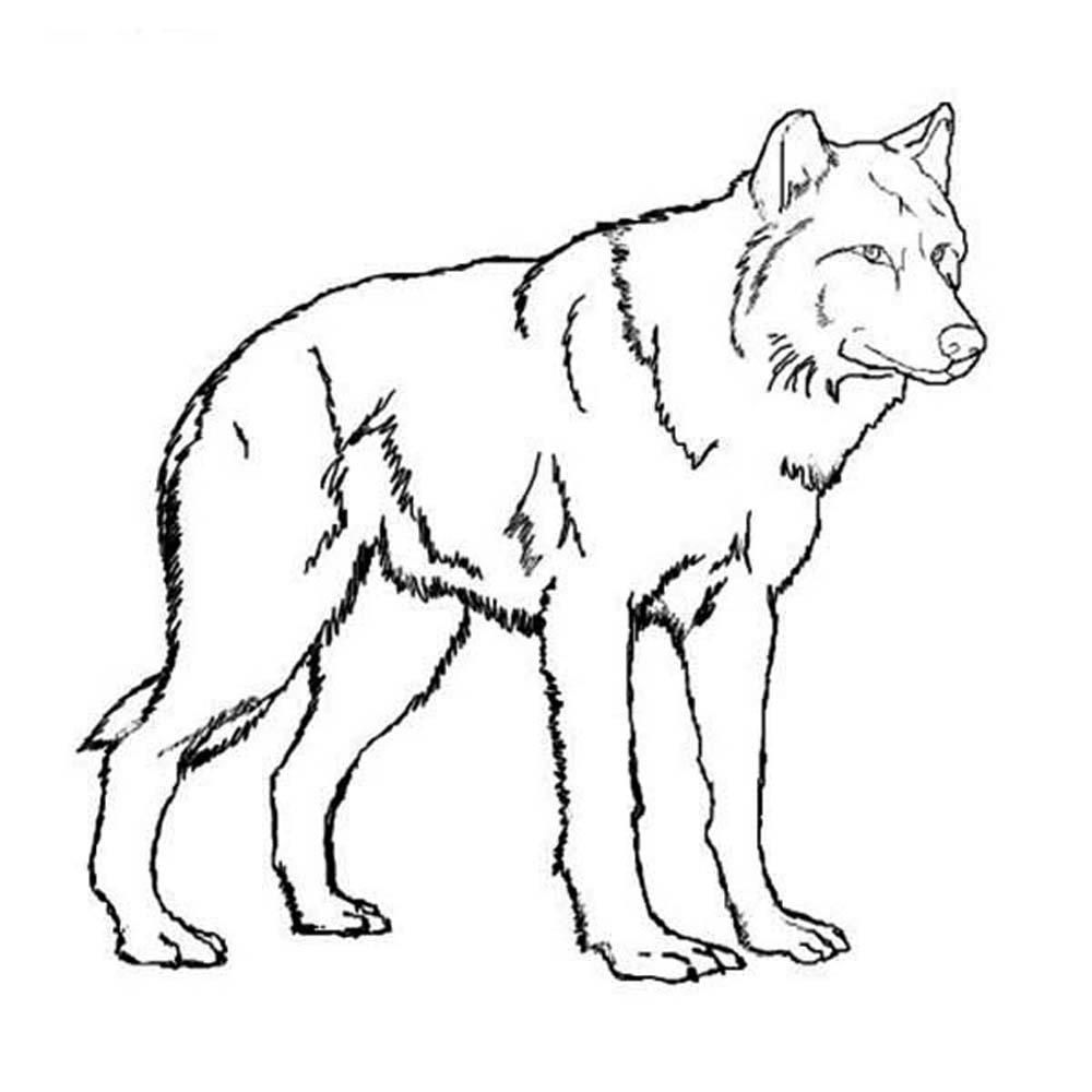 wolf pictures for kids free printable wolf coloring pages for kids animal place pictures kids for wolf