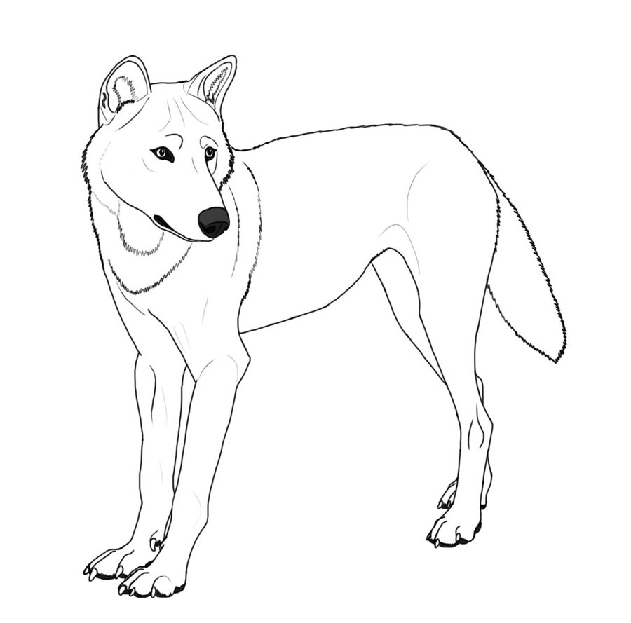 wolf pictures for kids free printable wolf coloring pages for kids animal place pictures wolf kids for