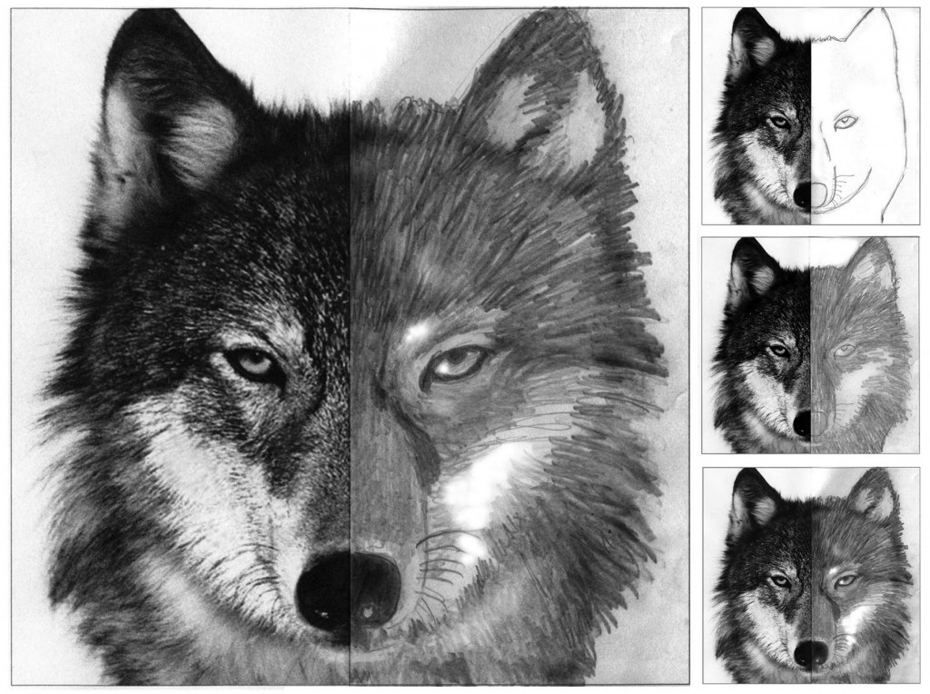wolf pictures for kids free printable wolf coloring pages for kids pictures kids wolf for