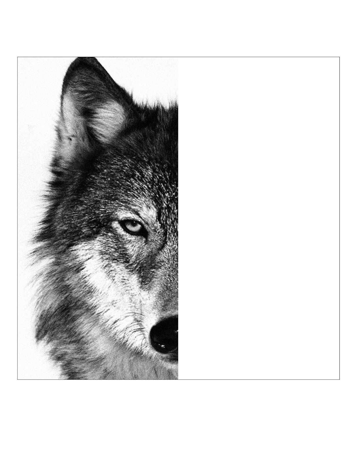 wolf pictures for kids free printable wolf coloring pages for kids wolf colors kids for wolf pictures