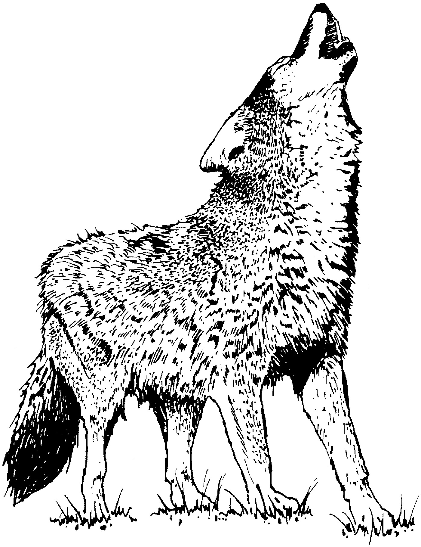 wolf pictures for kids wolf face template animal art projects kids art projects wolf kids for pictures