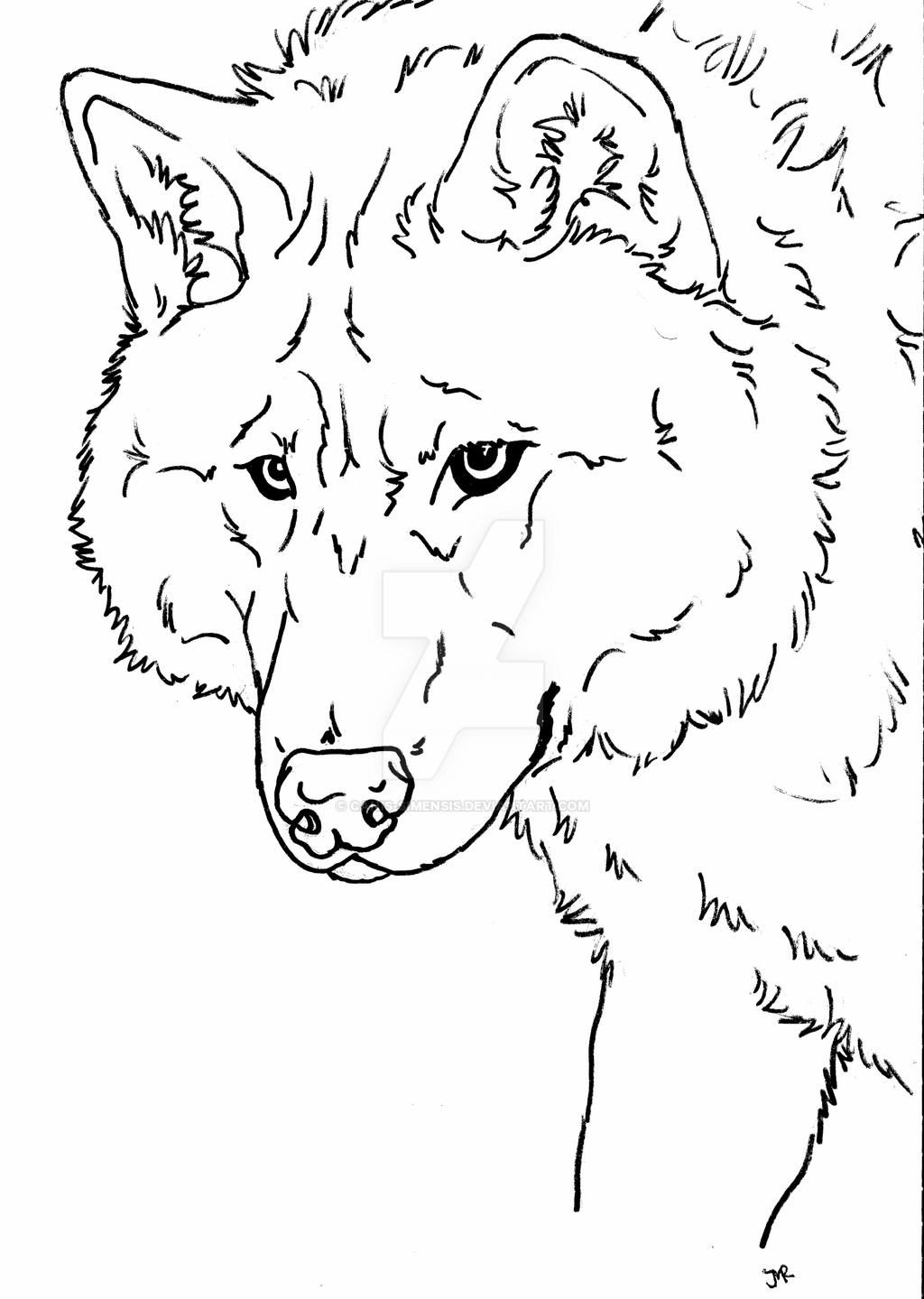 wolf puppy coloring pages wolf dog coloring page by canis simensis on deviantart wolf puppy pages coloring