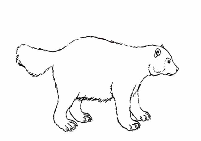 wolverine animal drawing how to draw a wolverine draw tutorials coloringpagesonlycom wolverine animal drawing
