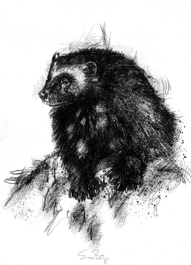 wolverine animal drawing newest for angry wolverine animal drawing creative animal drawing wolverine