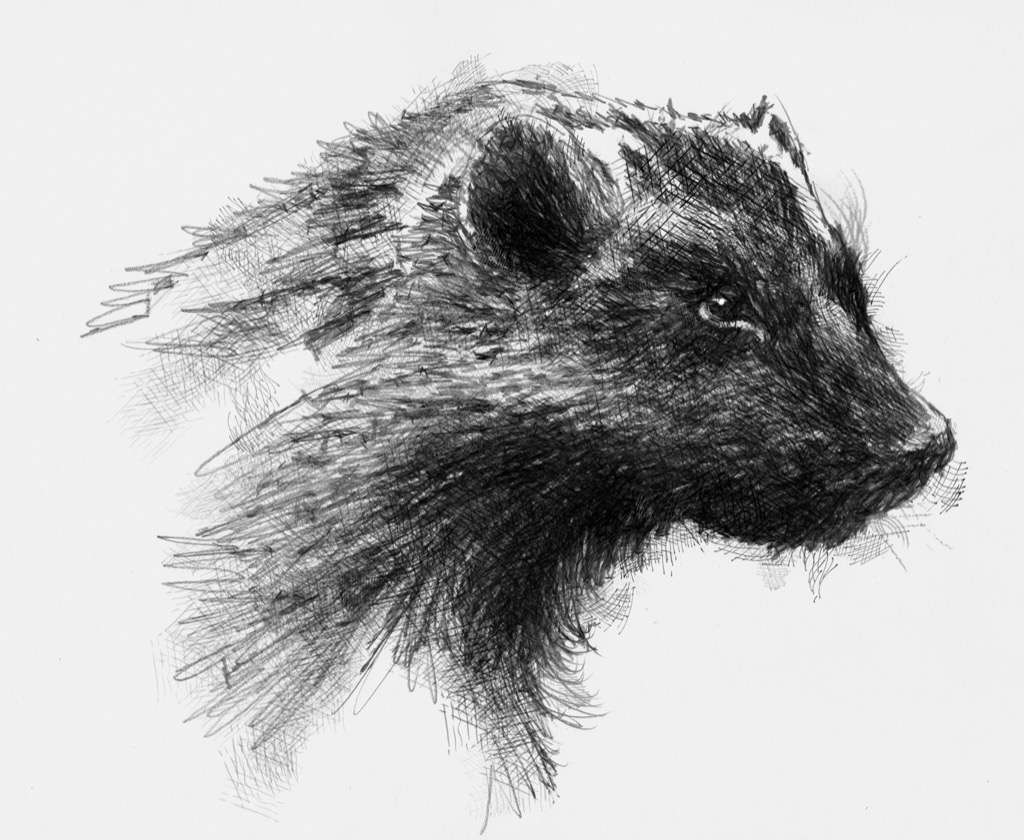 wolverine animal drawing trends for cool wolverine animal drawings pictures animal drawing wolverine