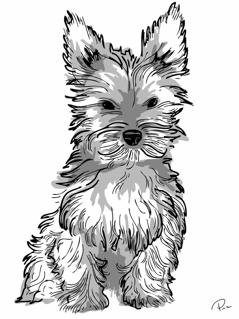 yorkie printable coloring page yorkie coloring pages free printable coloring pages coloring printable page yorkie