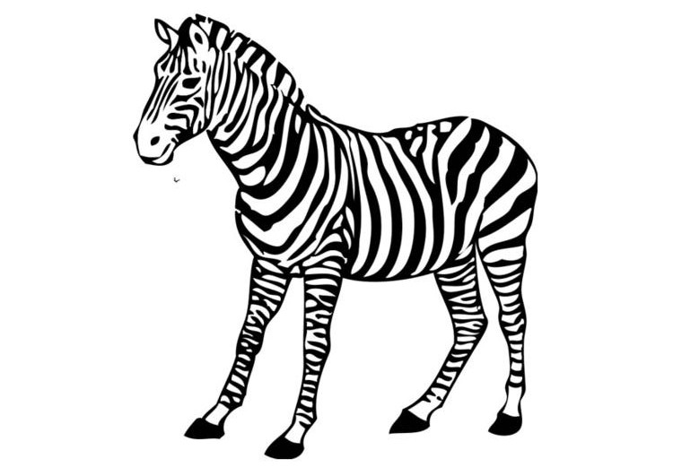 zebra print coloring pages baby zebra drawing at getdrawings free download print pages zebra coloring