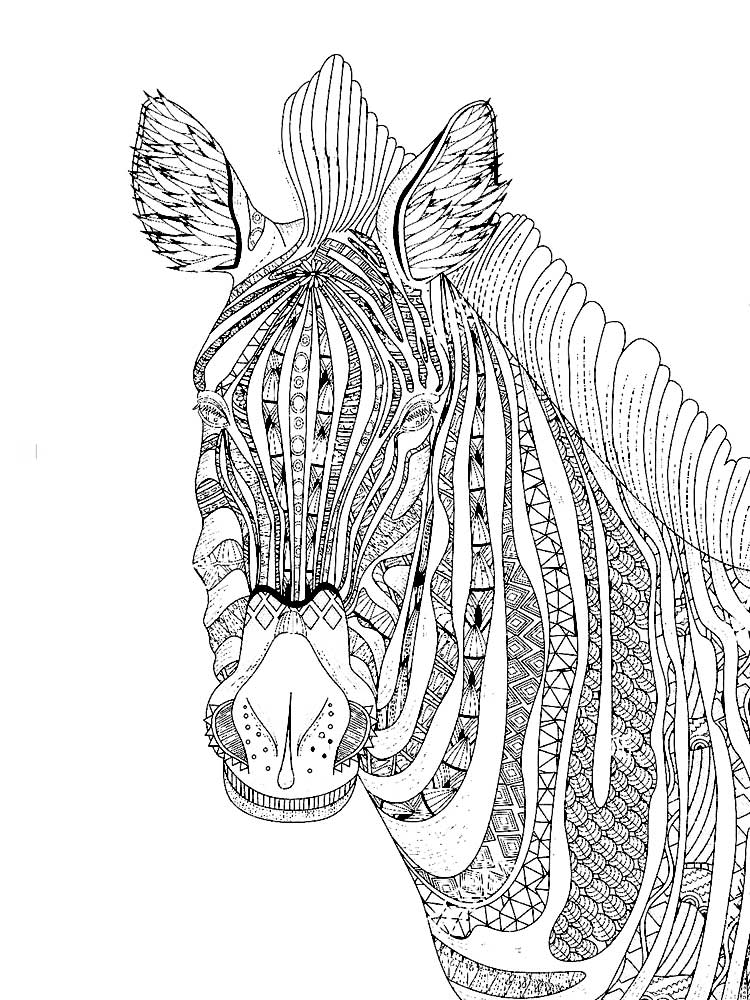 zebra print coloring pages coloring town pages zebra coloring print