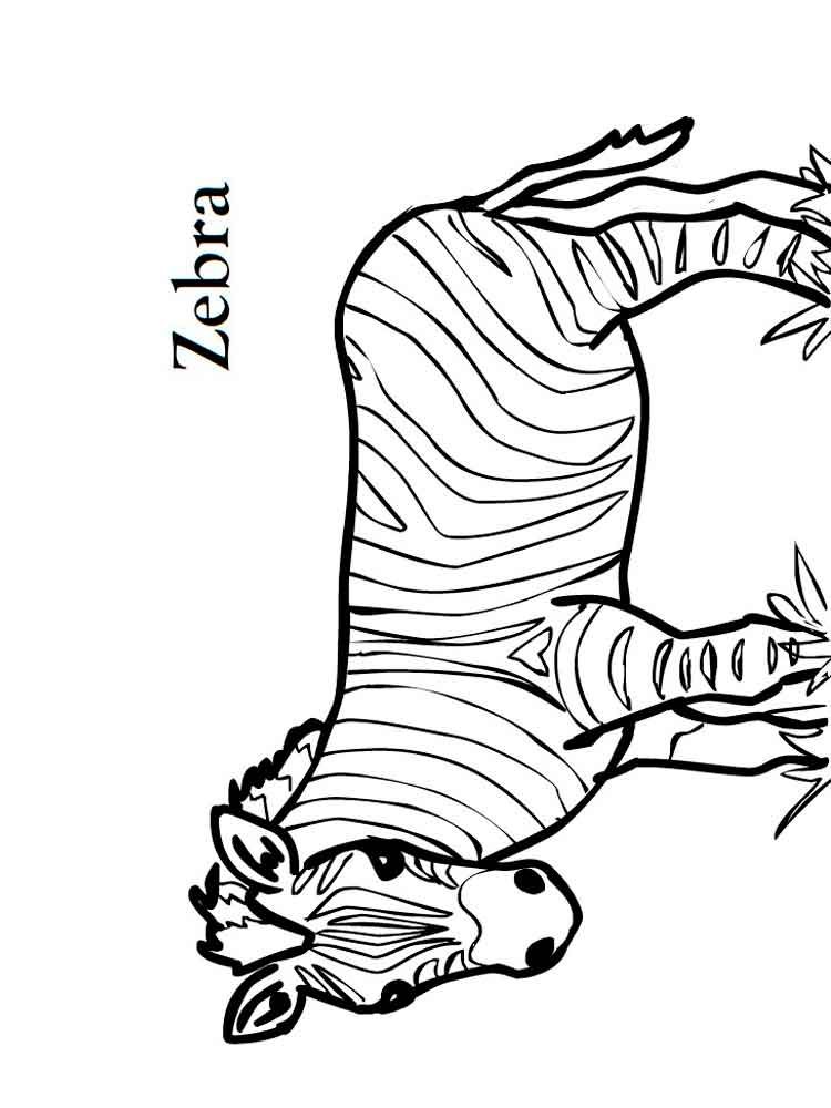 zebra print coloring pages free printable zebra coloring pages for kids animal place zebra coloring pages print 1 2