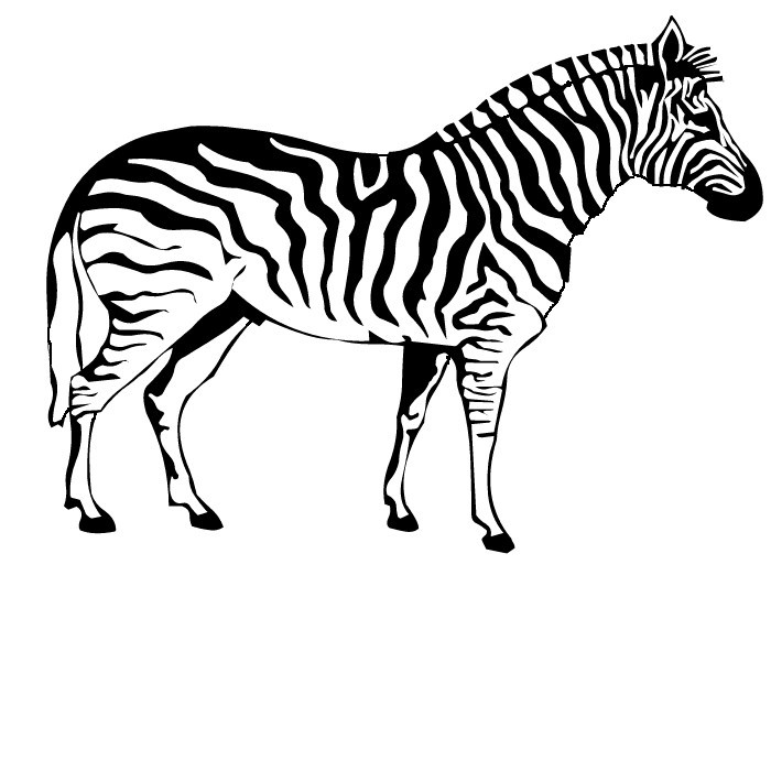 zebra print coloring pages z for zebra coloring page download print online coloring print zebra pages