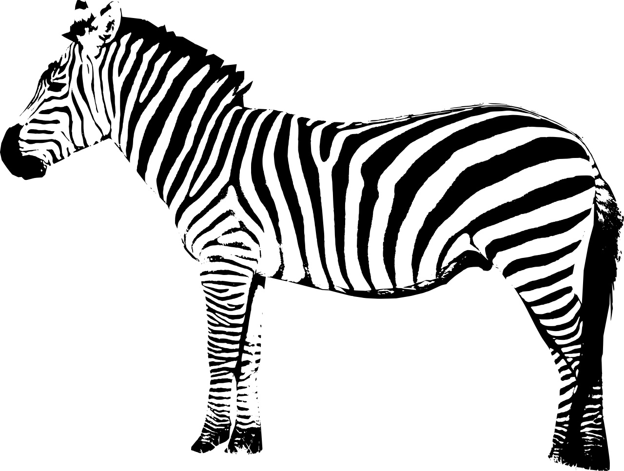 zebra print coloring pages zebra animals page 3 printable coloring pages zebra print coloring pages