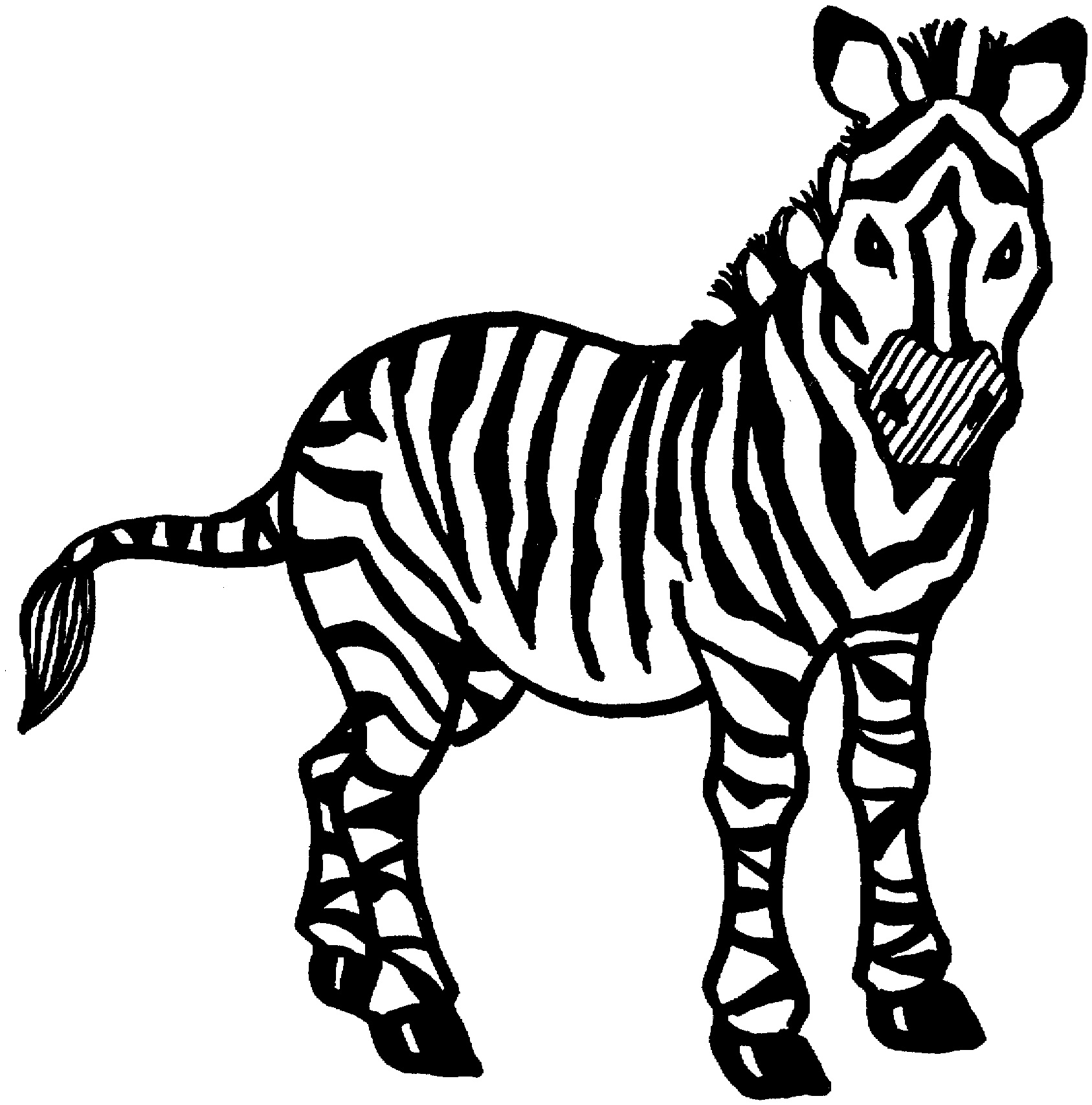 zebra print coloring pages zebra coloring pages to download and print for free coloring print zebra pages