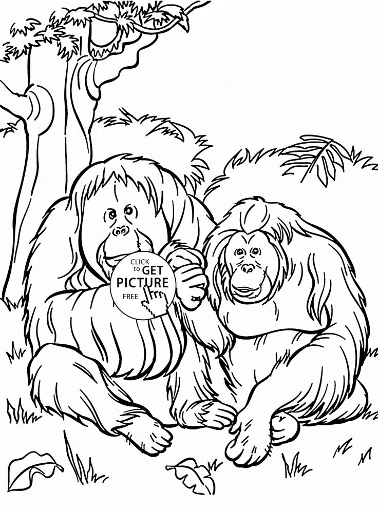 zoo animal coloring pages to print orangutans coloring page for kids animal coloring pages animal to coloring zoo pages print