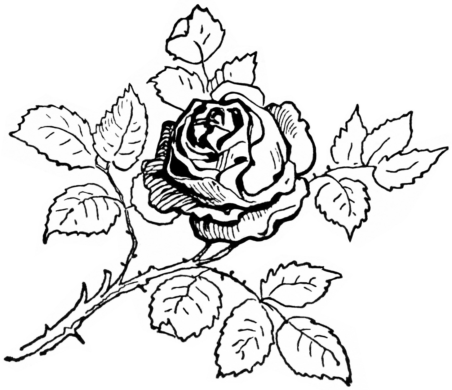 a coloring page of a rose flower coloring pages rose a a page coloring of