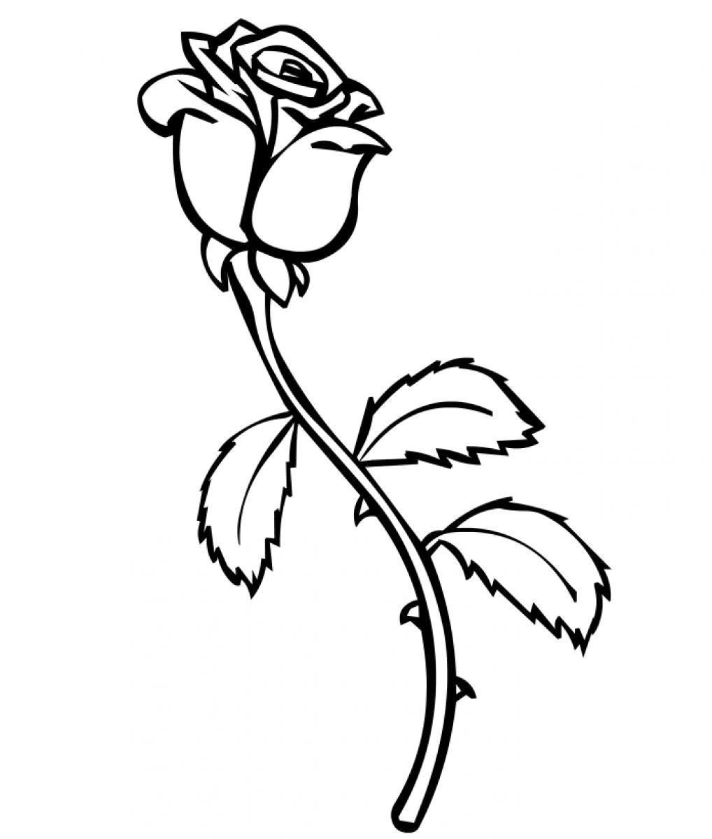 a coloring page of a rose free printable roses coloring pages for kids a a coloring page of rose